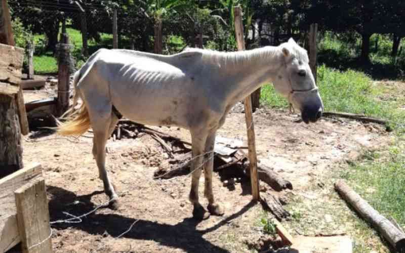 Cavalo idoso, debilitado e com carrapatos é resgatado em Piracicaba, SP