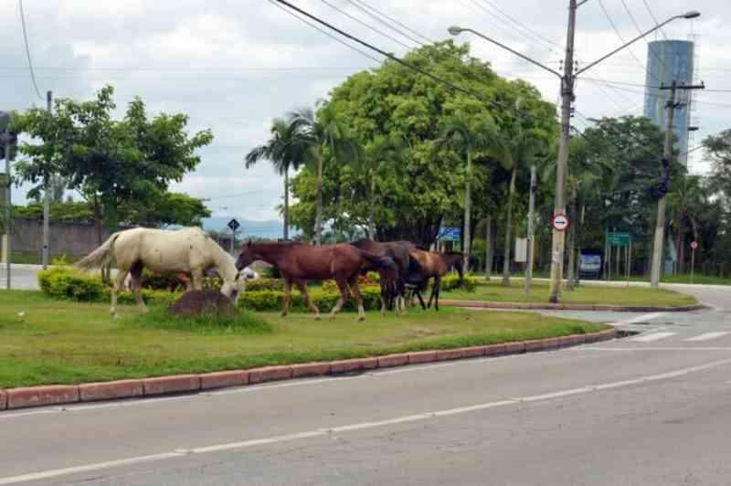 População de São José dos Campos (SP) pode adotar animais de médio e grande porte