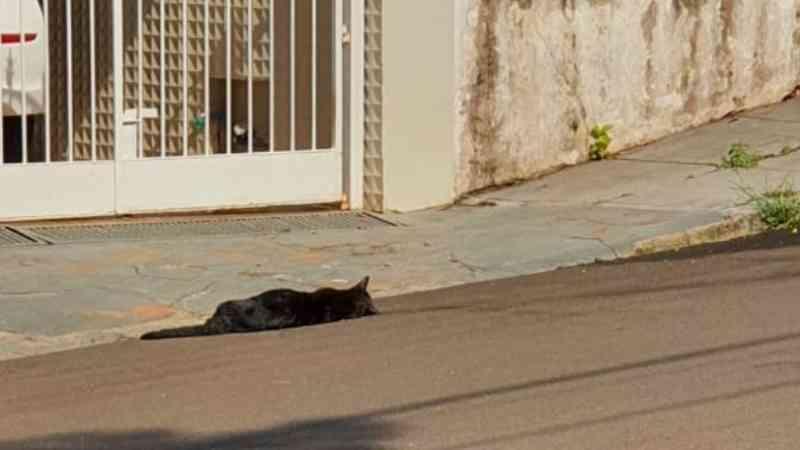 Moradores denunciam morte de gatos por envenenamento em São Carlos, SP