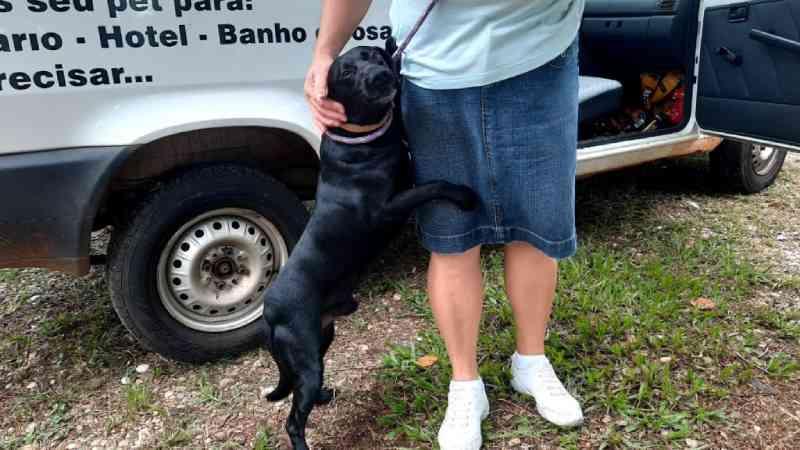 Prefeitura formaliza primeiros dois cães comunitários de São Carlos, SP