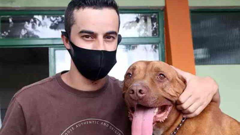 Após dois anos de espera, pit bull ganha nova família em Santo André, SP
