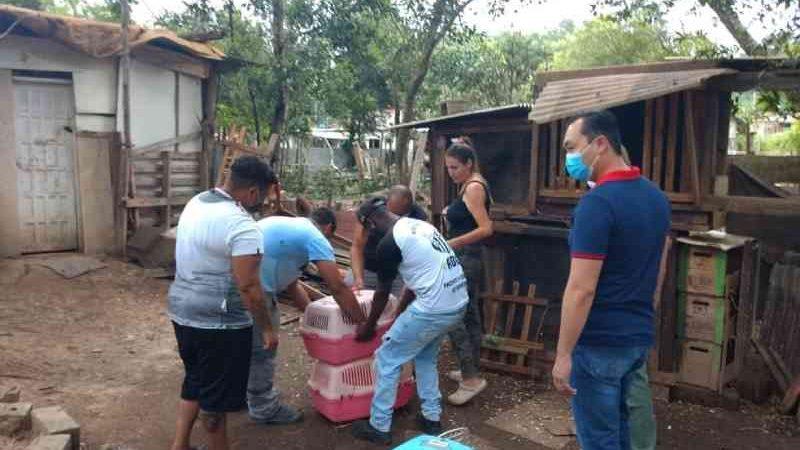 Cerca de 60 animais são resgatados em situação precária e com sinais de maus-tratos em sítio de Suzano, SP