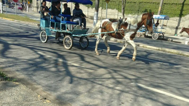 Prefeitura acata decisão histórica da Justiça, que proíbe veículos com tração animal em Aparecida, SP