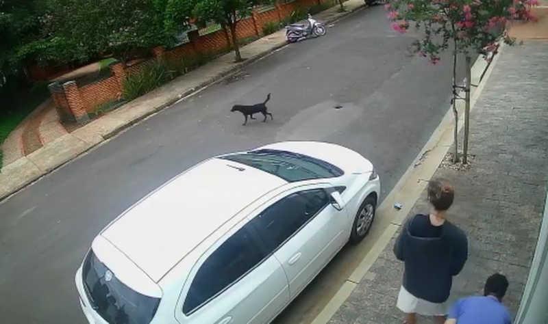 Polícia investiga abandono após casal deixar cachorro na rua em Assis, SP; VÍDEO