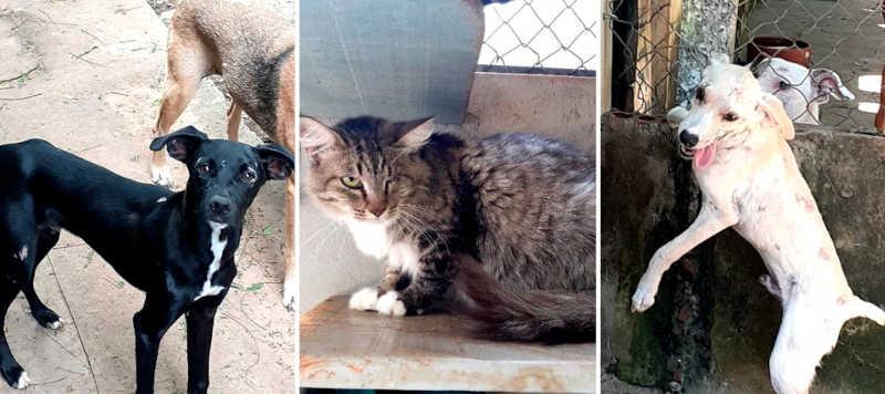 Animais sobreviventes da violência buscam novo lar em Bauru, SP