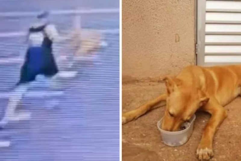 Homem agride cachorro a pauladas no Residencial Rubi e caso será levado à Justiça em Limeira, SP