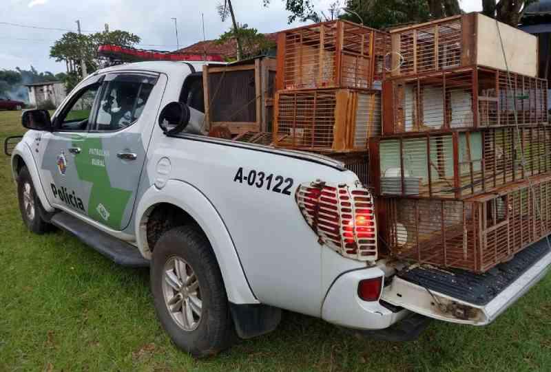 Homem é multado em R$ 28 mil por manter aves silvestres em cativeiro no litoral de SP