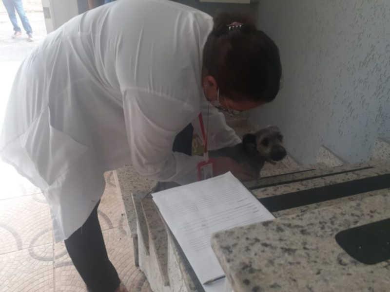 Cachorro é resgatado após sofrer maus-tratos em Ribeirão Pires, SP