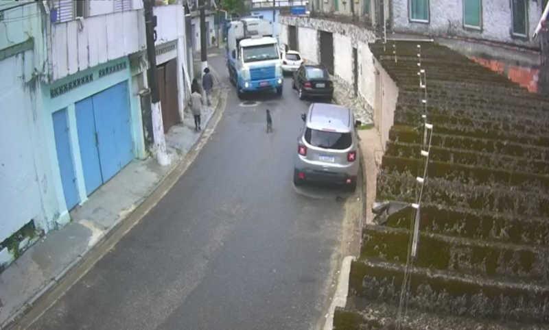 Cão fica ao lado do corpo de 'amigo' após ver cachorro ser atropelado por caminhão, em São Vicente, SP