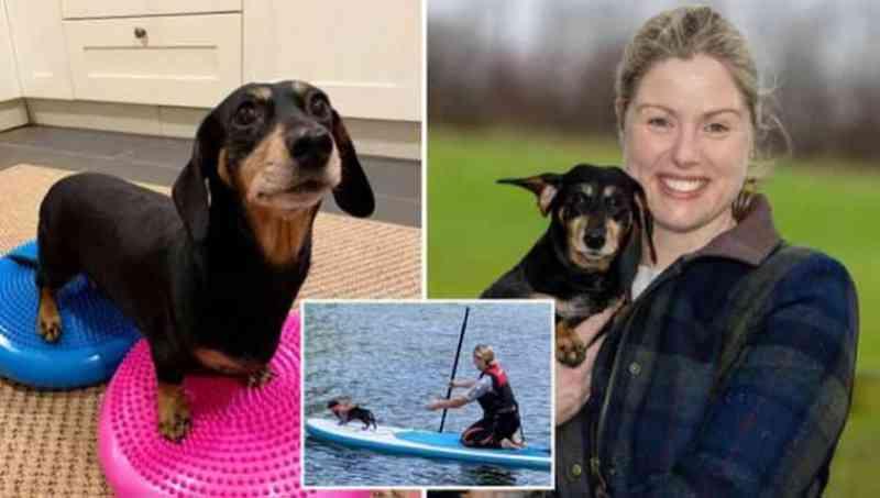 Cachorro paralisado se recupera com pilates e Stand Up Paddle