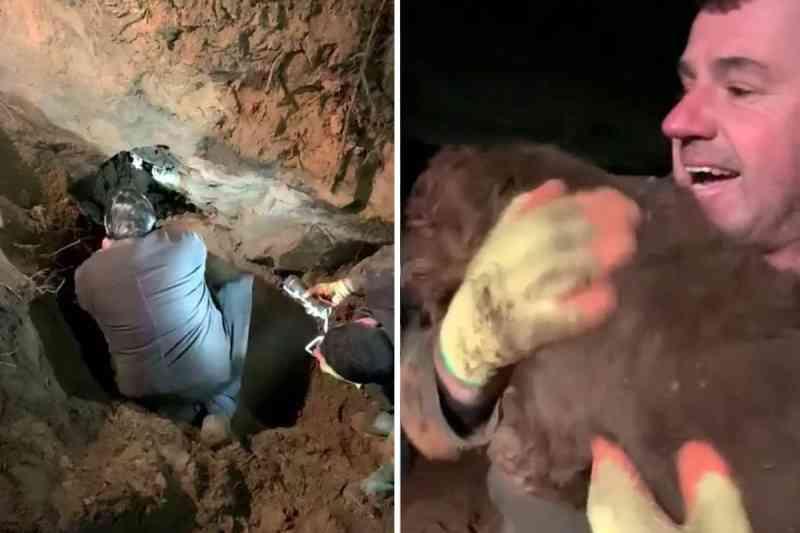 Comovente: cadela surda é resgatada após 30 horas presa em buraco de coelho