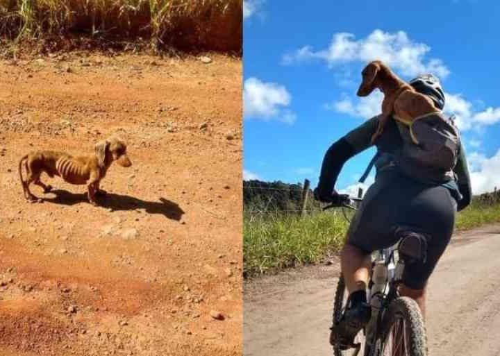 Desnutrido, cachorro é adotado por ciclistas em história emocionante
