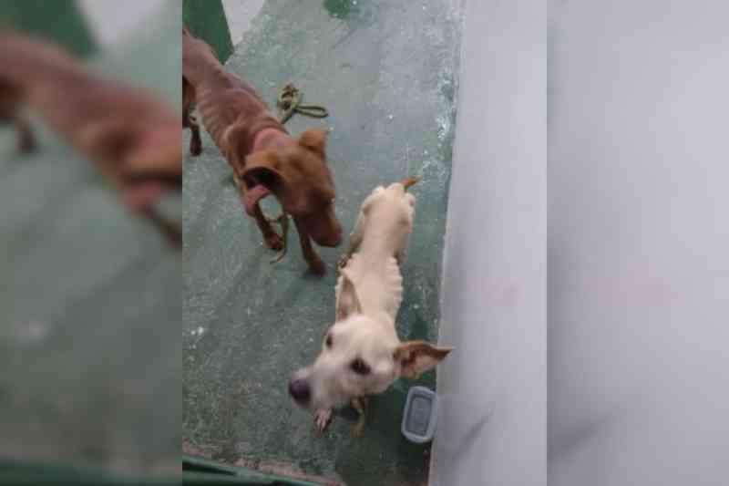 Polícia prende tutora que deixou cadela faminta comer filhotes, no DF
