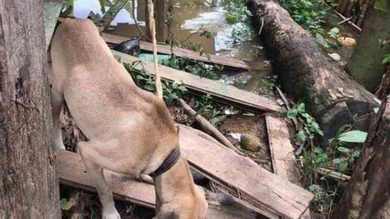 Polícia Civil resgata mais 16 cães mantidos em situação de maus-tratos em Peruíbe, SP