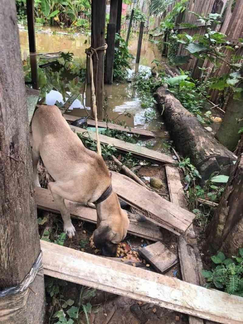 ONG alerta para animais abandonados em casas de bairros atingidos pela cheia do rio em Rio Branco, AC