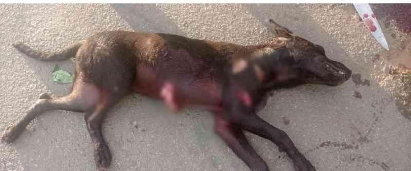 Homem é preso em Aparecida de Goiânia (GO) após matar cachorro com golpes de faca