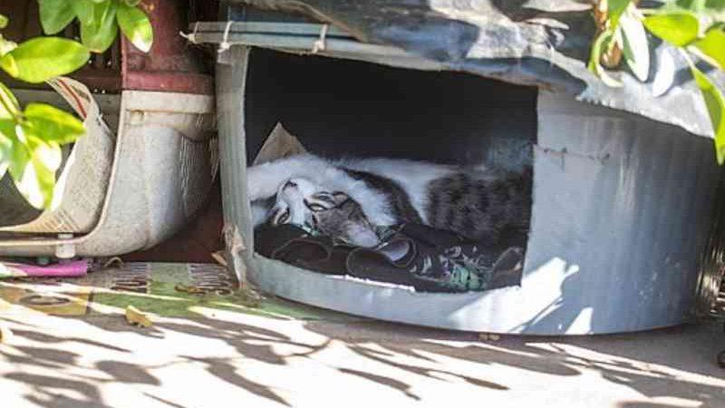 Cerca de 200 gatos estão em situação de abandono em Piatã, Salvador, BA