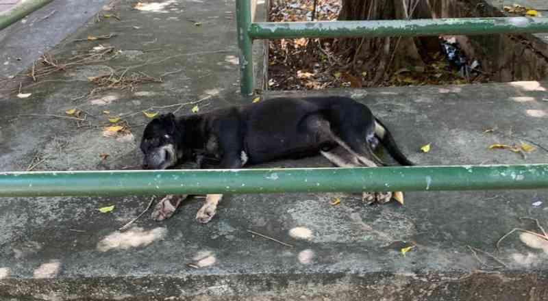 """Após dossiê sobre maus-tratos a animais, UFBa se pronuncia e voluntários repudiam: """"Vergonhoso"""""""