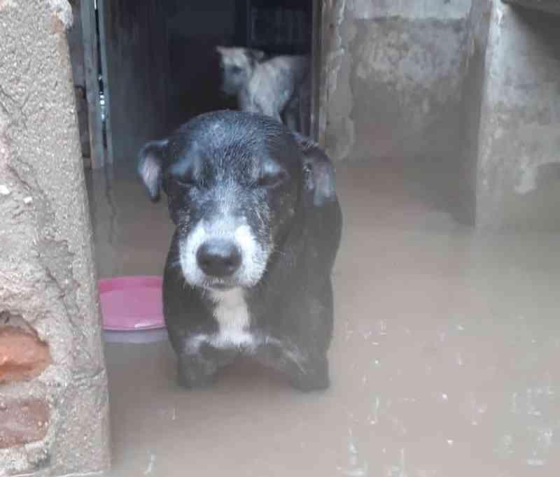 Chuva alaga abrigo e deixa cães e gatos ilhados no interior do Ceará