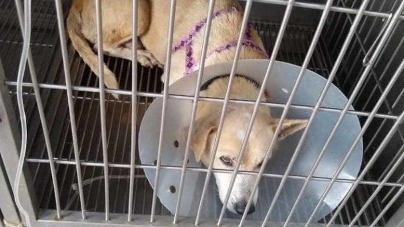 Projeto que cuida de animais abandonados na Universidade Federal do Ceará pede doações para seguir funcionando