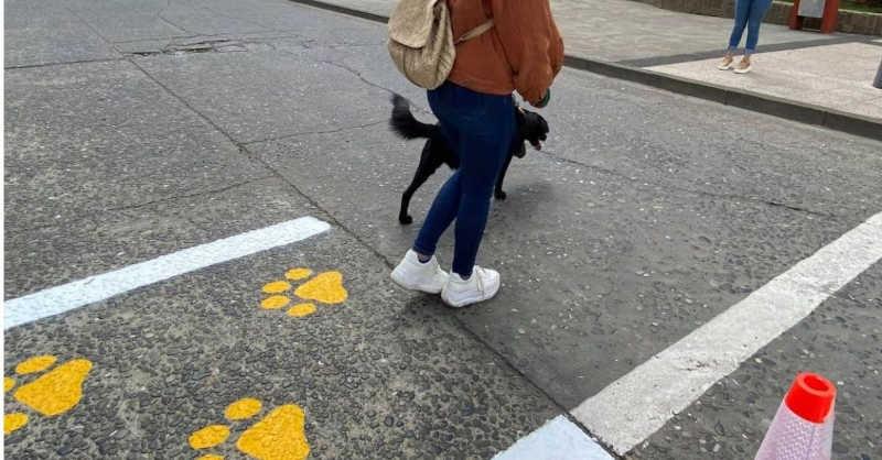 Para evitar atropelamentos, Chile cria faixas exclusivas para cães e gatos atravessarem a rua