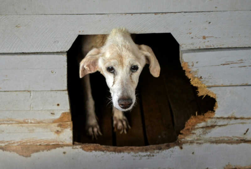 Cuba promete a manifestantes que aprovará lei de bem-estar animal neste mês