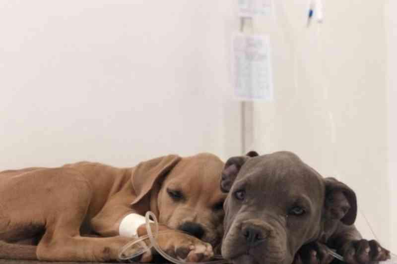 Redução de 61% em castrações acende alerta sobre superpopulação de animais nas ruas do DF