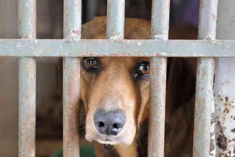 Está em vigor lei que obriga condomínios a denunciar à polícia casos de maus-tratos contra animais no DF