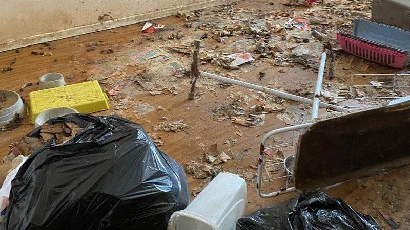 Animais eram levados para morrer em apartamento em Vila Velha, ES