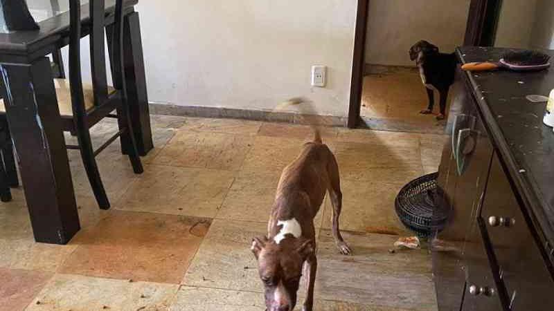 Família usava animais maltratados para arrecadar dinheiro para uso próprio, diz polícia do ES