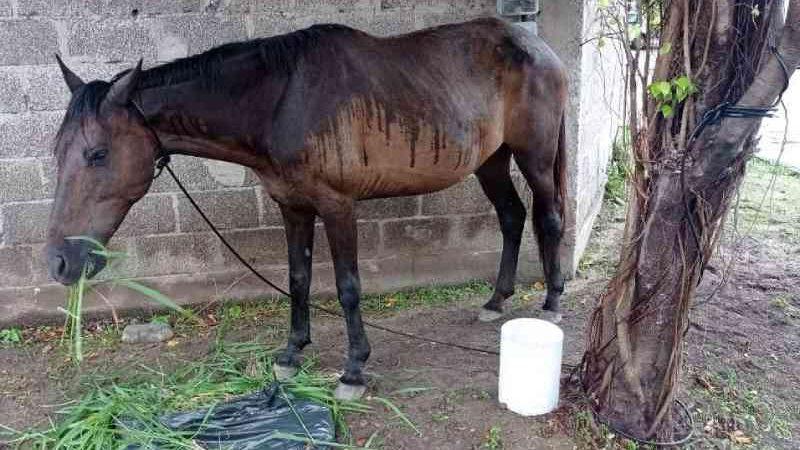 Moradores ajudam cavalo abandonado e se queixam sobre serviço de recolhimento em Vitória, ES