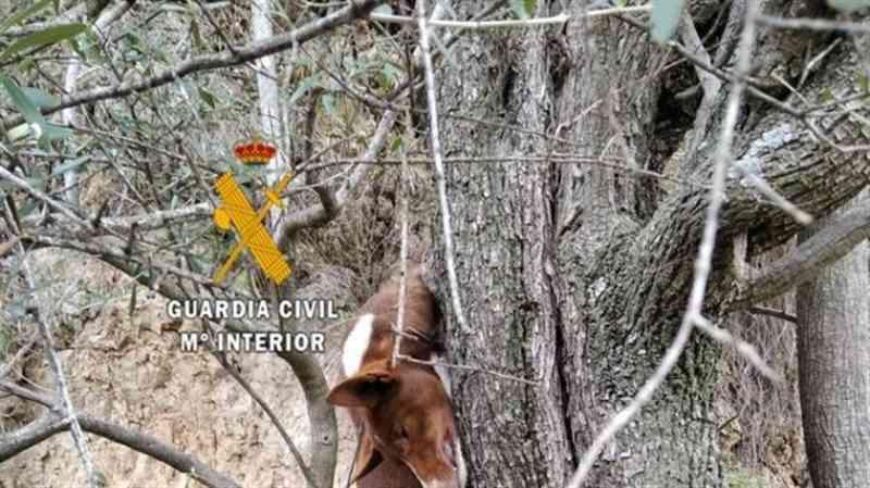 Pai e filho enforcam cão numa oliveira e depois atiram-no de um penhasco, na Espanha
