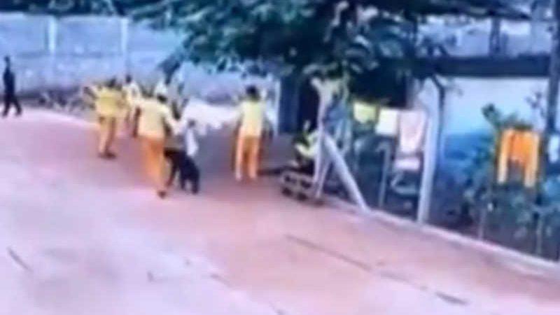 Detento do semiaberto foi filmado matando cachorro com chute em presídio de Cachoeira Alta, Goiás — Foto: Reprodução/TV Anhanguera