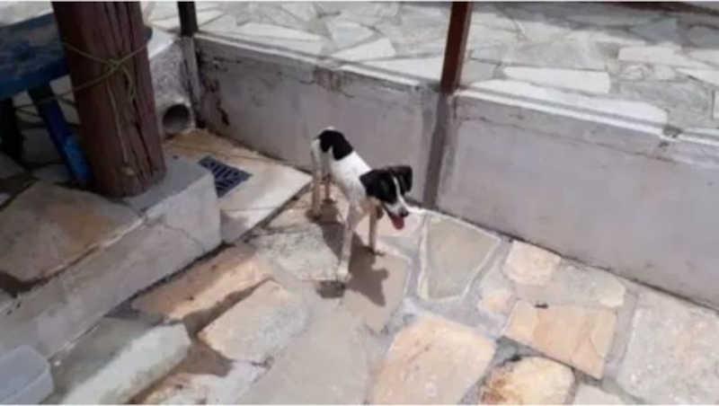Polícia Civil resgata filhote de cachorro acorrentado em casa vazia, em Pirenópolis, GO
