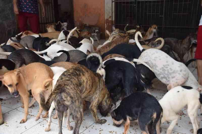 Justiça obriga retirada de cães de residência de idosa em São Luís, MA
