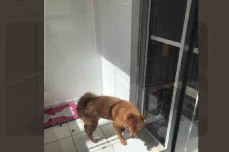 Moradores denunciam maus-tratos a um cachorro em apartamento no Alto do Calhau, em São Luís, MA