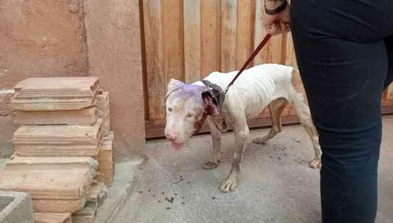 Homem é preso em BH suspeito de maus-tratos a um cachorro; 'extremo abandono'