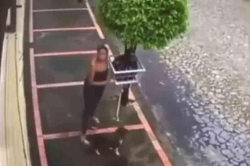 Vídeo: mulher amarra cachorro em lixeira em Belo Horizonte (MG) e é procurada pela polícia
