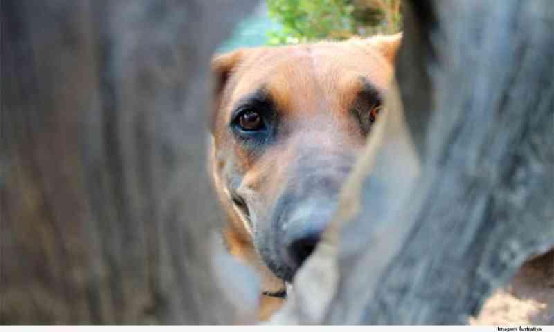 Homem é condenado por morte de cadela em Carmo de Minas, MG