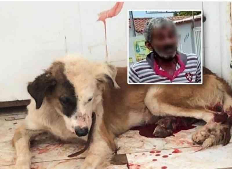 ASFIPA resgata cachorro com fratura exposta que era agredido pelo próprio tutor em João Pinheiro, MG
