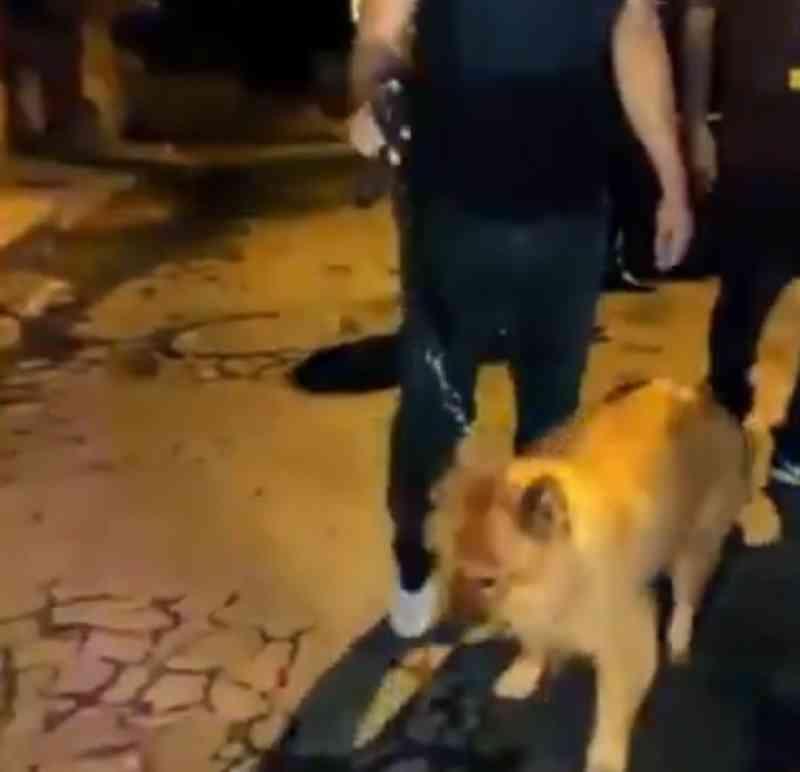 Cão é agredido a vassouradas em Juiz de Fora (MG) vídeo mostra animal bem após situação