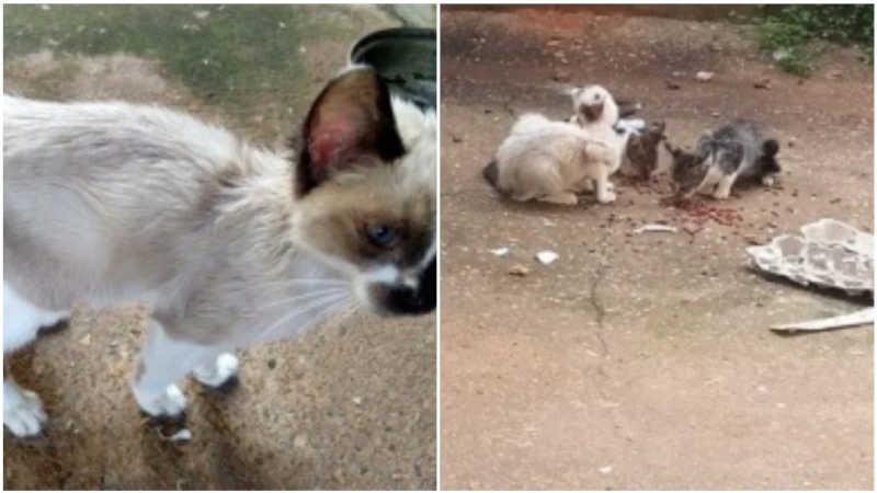 Homem é preso por maus-tratos contra 10 gatos e alega 'falta de tempo'
