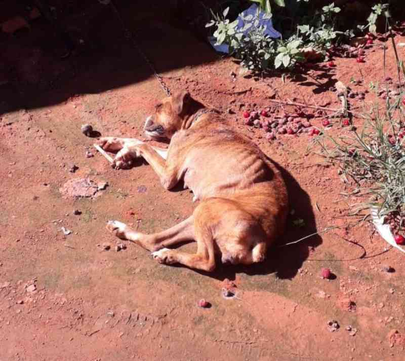 Polícia de Aparecida do Taboado (MS) autua jovem de 22 anos por maus-tratos a cão encontrado desnutrido e com feridas e parasitas