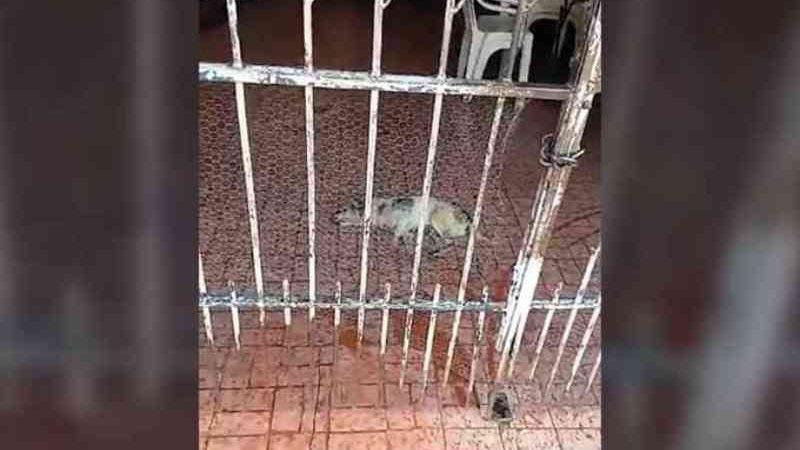 Agonizando, cão chama atenção de vizinhos e polícia é acionada em Campo Grande, MS; vídeo