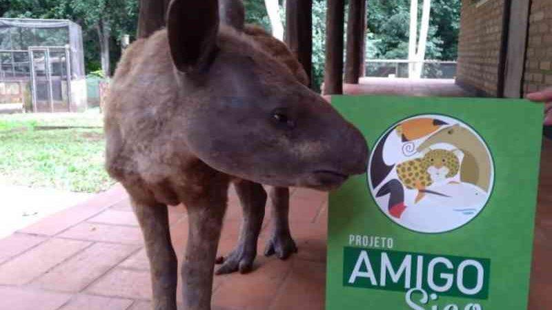 Tratamento de homeopatia reduz mortalidade e aumenta recuperação de animais silvestres do Cras