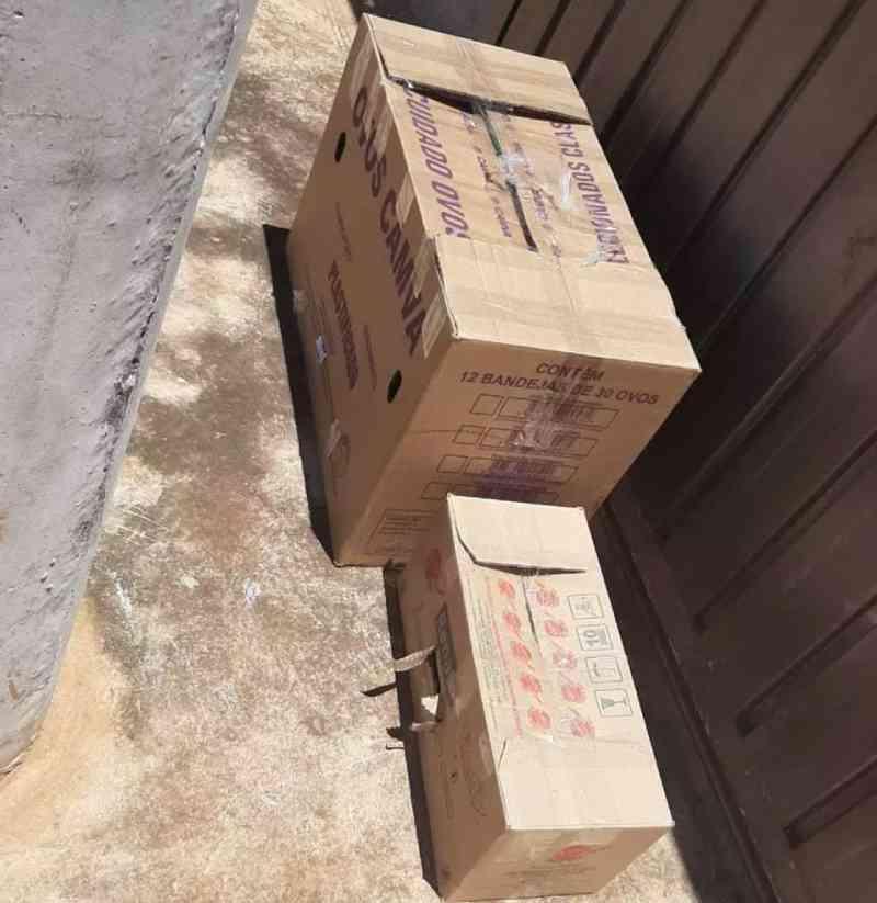 Mãe e filha lacram gatos em caixa e abandonam em casa de protetora em Campo Grande, MS