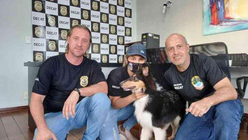 Cão que foi maltratado pelo tutor é encaminhado para lar temporário em Campo Grande, MS