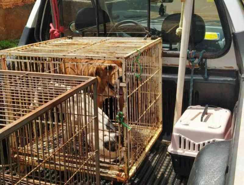 Flagrado arrastando cachorrinha, homem vai parar na delegacia, em Dourados, MS