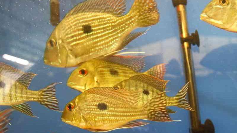 MP cobra R$ 291,2 mil de indenização de empresa por morte de peixes do Aquário