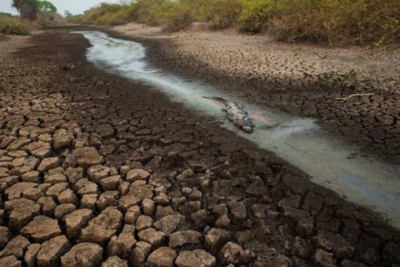 Fotógrafo Araquém Alcântara registra fuga de animais e a destruição das queimadas no Pantanal. — Foto: Araquém Alcântara/Divulgação